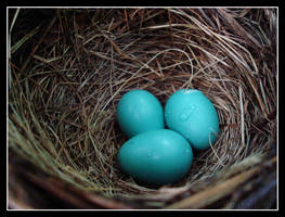 robin eggs by catastrophical