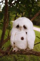 Sad Owl 2 by distasty