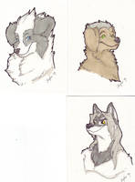 Bust shots CANINES by CasFlores