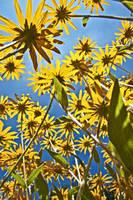 roof of flowers by MarvinDiehl
