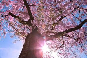 spring burst by MarvinDiehl