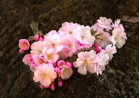 Sakura by MarvinDiehl