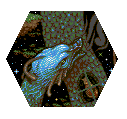 HEXQUISITE CORPSE: Tile 31 by Morganne