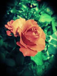 Rose by AnnaArmona