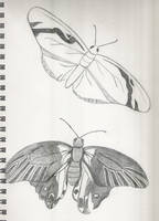 Butterfly Sketches by babygurl83