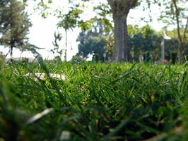 Through the Grass by babygurl83