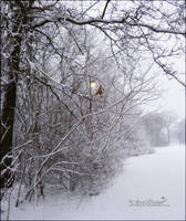 Lantern by babygurl83