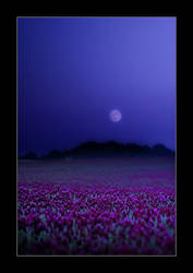 Purple Moonfield by Torsten-Hufsky