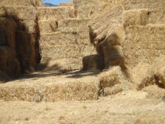 Falling Hay by rachellafranchistock