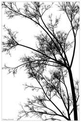 Minimalist Tree by Phoenixel-AB