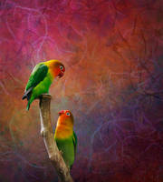 Parrot's Love by Rikka21