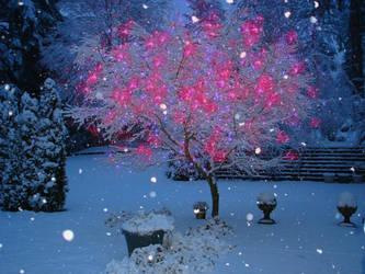 Snow Fall Wonder by sky-2011