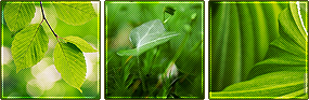 F2U - Green Leaves Deco Dividers by Ulfeid3