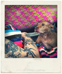 Pitbull in Love by Wildfeuer