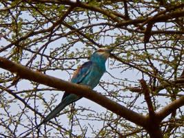 Bird of Ethiopia by MrDannyD