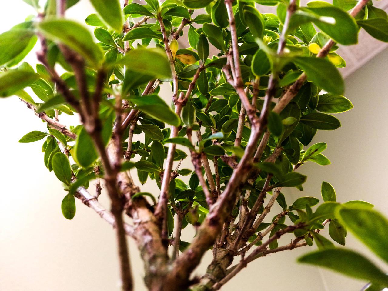 Bonsai Tree 1 by MrDannyD