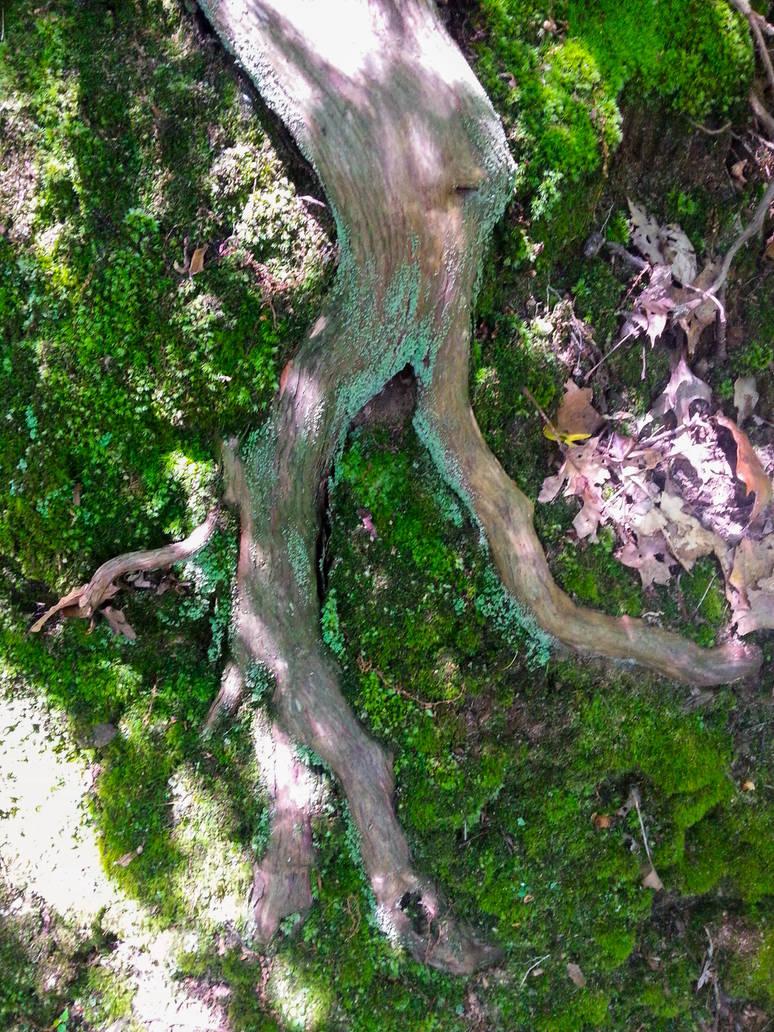 Root 1 by MrDannyD