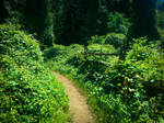 Path Less Traveled by MrDannyD