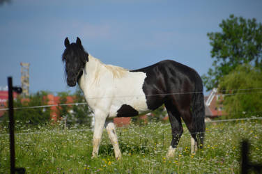 Horse 1 by D3PRO
