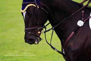 Grand Prix I by equitate
