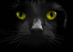 Dark beauty by checkmycollar
