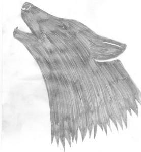 FelSchwarz's Profile Picture