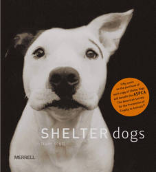 Shelter Dogs by Traer