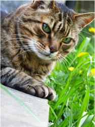 Oscar the Cat by Antony99