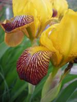 Yellow Wild Flowers by IWishIHadWingZ