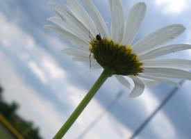 Spider Flower by IWishIHadWingZ