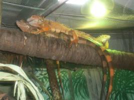 lizards by Jimbo-G