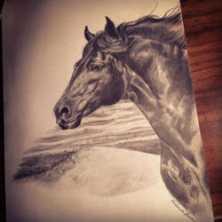 The Friesian by TheSilverWyrm