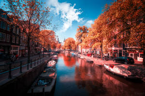 Amsterdam in Red by INVIV0