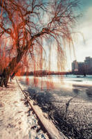 Winter Red by INVIV0