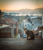 cat by INVIV0