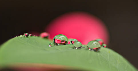 microdroplets by theo-cupent42