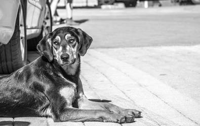 Stray dog in Greece by WeitkampPhotography