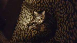 Cat in the dark by eternal1990