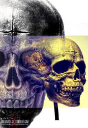Skull study by Ballistyc