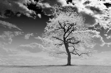 Some IR Tree by Zmaslo