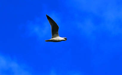surfing in the sky by ekin06
