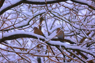 under snowing by ekin06