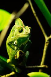 Chameleon by marichris