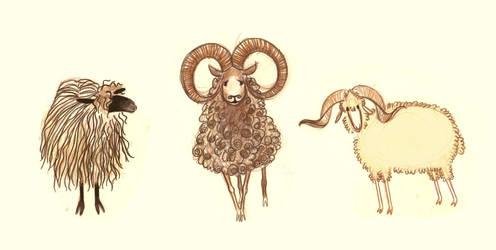 Sheep by marlenakate