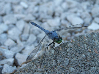 The Dragonfly by KyleBoswell