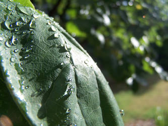 Wet Leaf by KyleBoswell