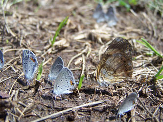 Pack of Butterflies by KyleBoswell