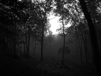The Forest by KyleBoswell