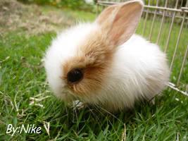 Bunny+Cheesezzz+ by GothicBunnyChan