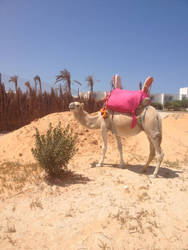 Camel by Waronicuke